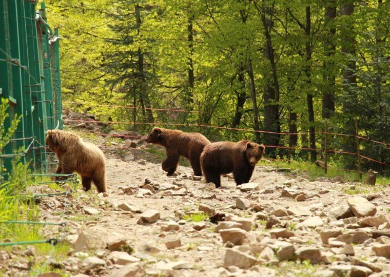 Одноденні екскурсії Карпатами та Закарпаттям Озеро Синевир та Водоспад Шипіт