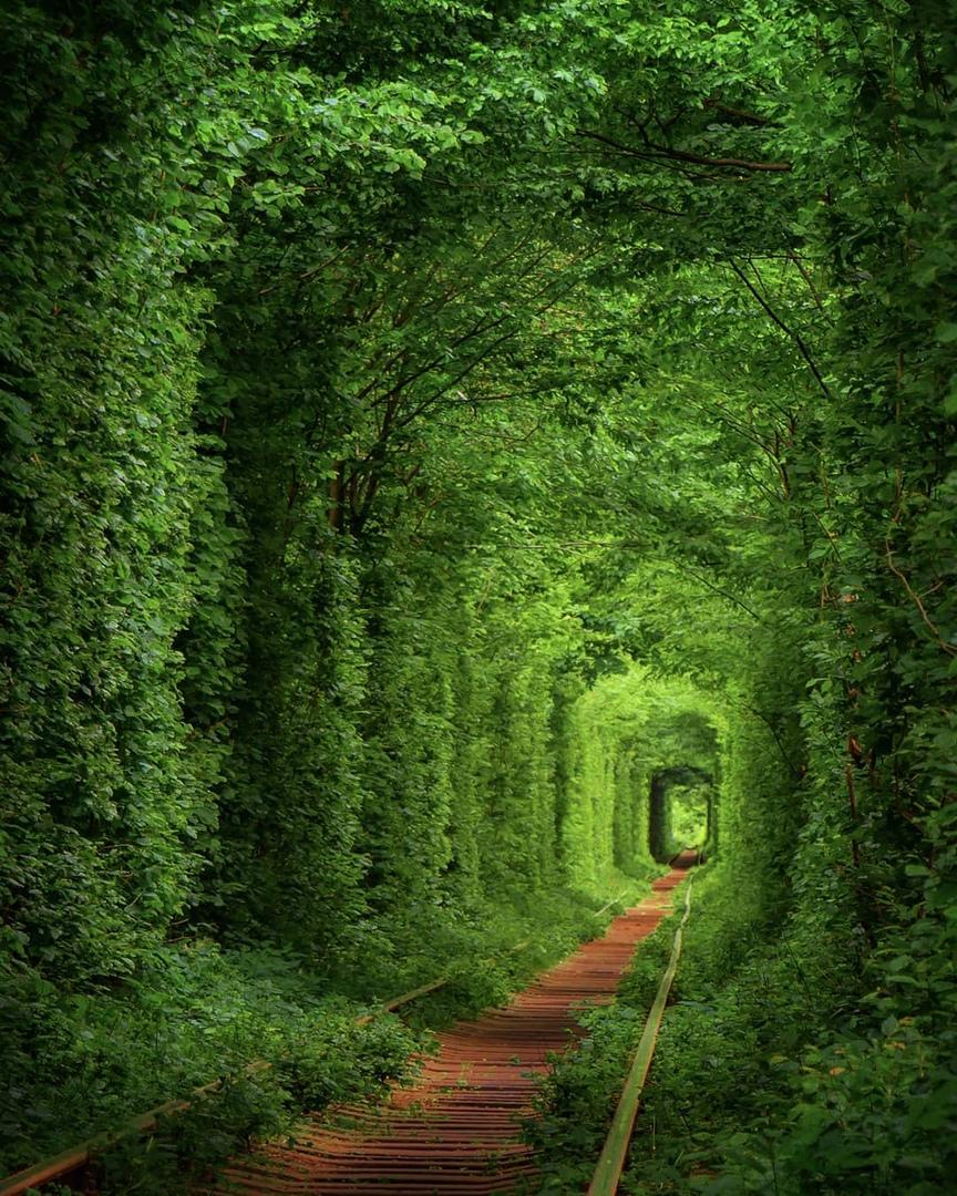Тунель кохання-Дубно -Тараканів - Туристична фірма «Капітолій» у Львові