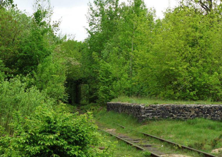 Тури Західною Україною Тунель кохання